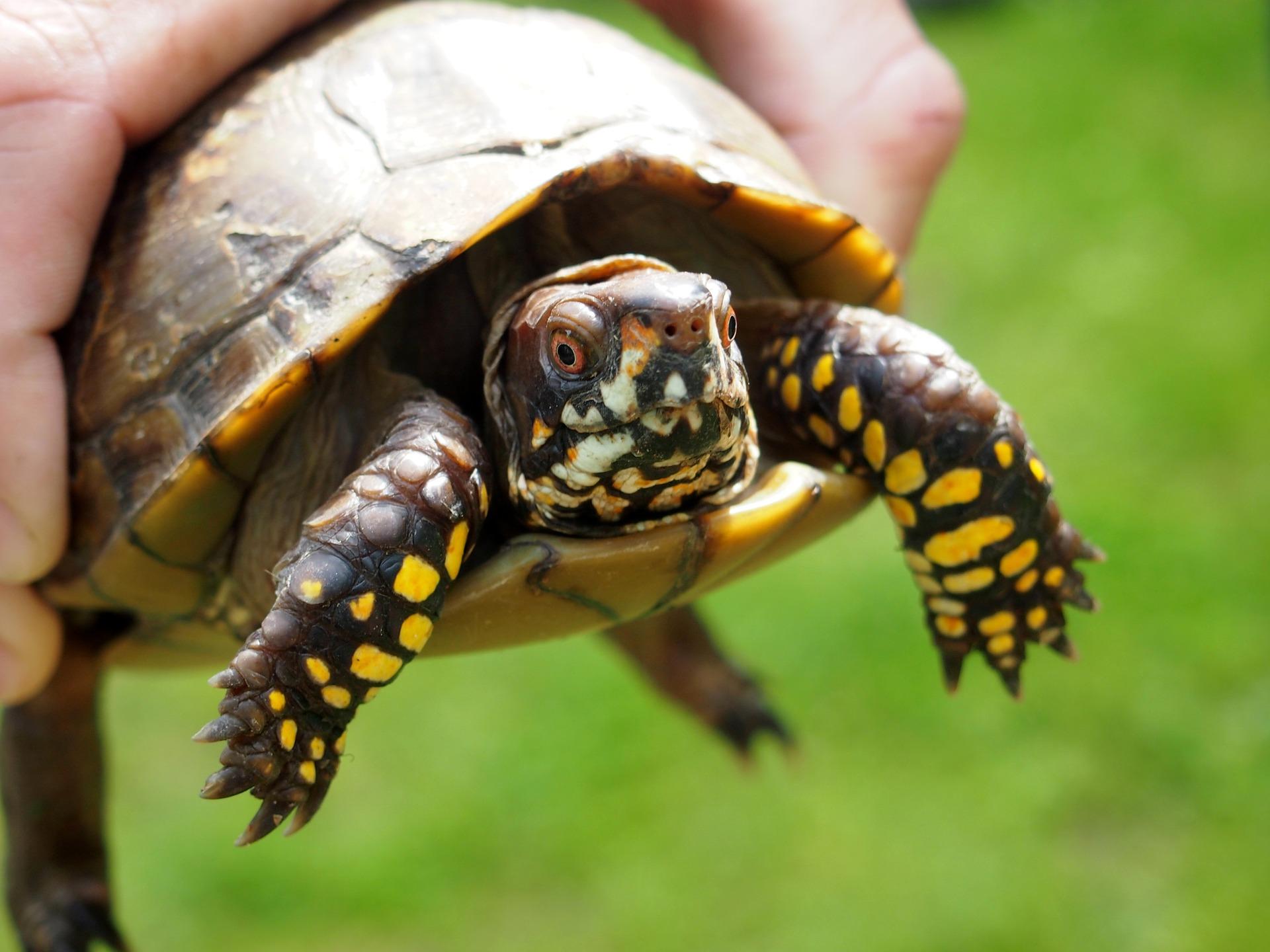 turtle-1531367_1920